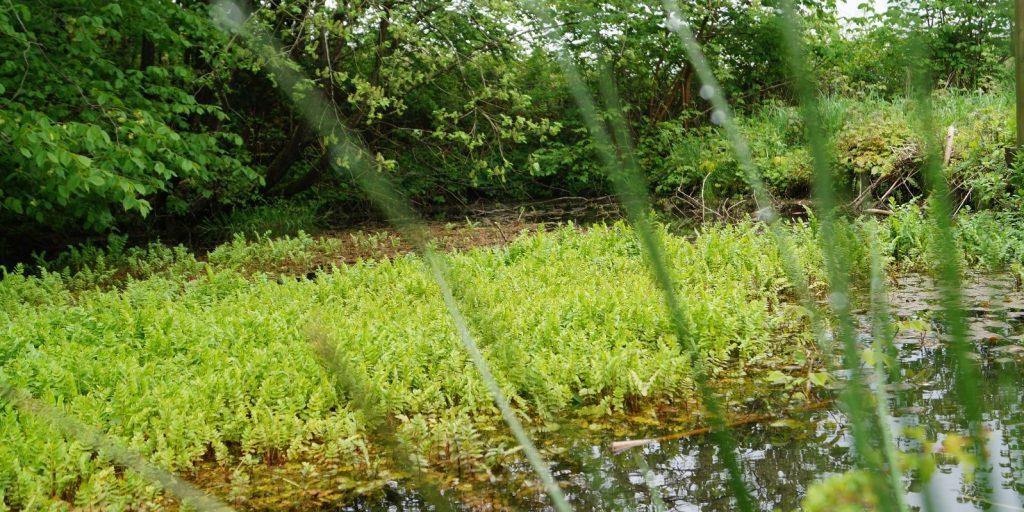 Lokal Afledning af Regnvand (LAR). Dimensionering og rådgivning