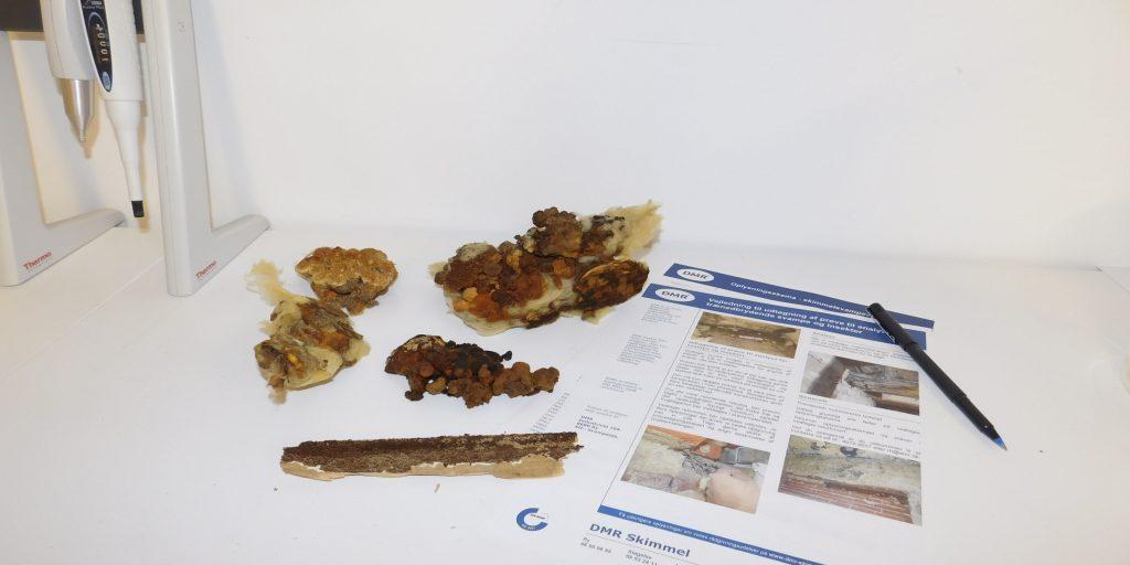 Trænedbrydende svampe – udtag selv prøver til analyse