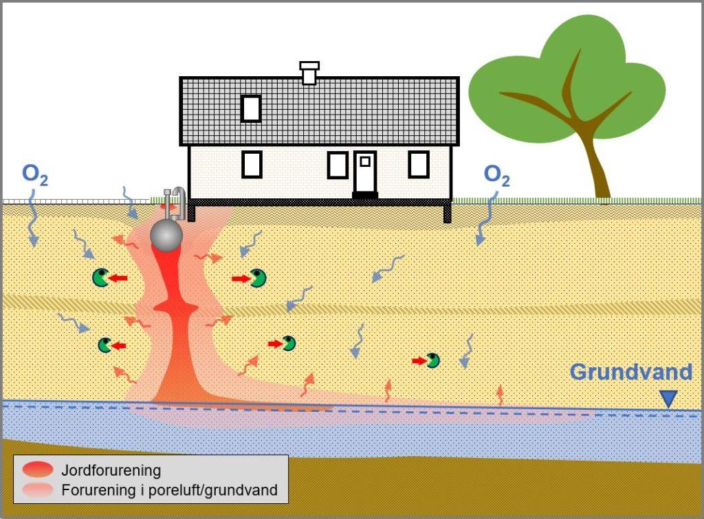 Naturlig nedbrydning af forurening i jord og grundvand