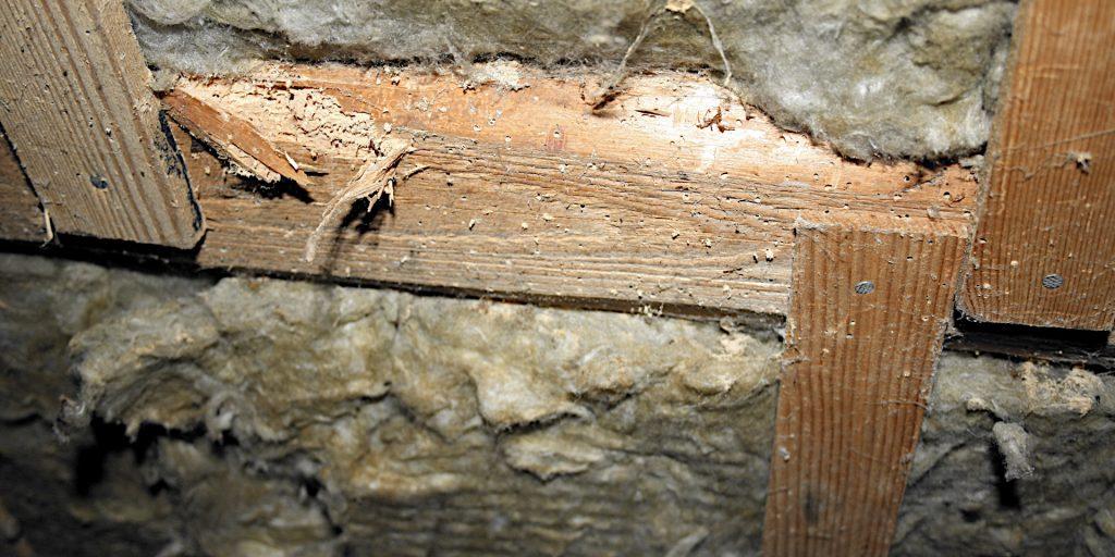 Trænedbrydende svampe og insekter - analyse, dokumentation